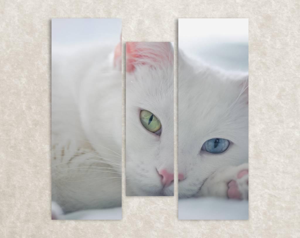 Foto op canvas van een witte kat