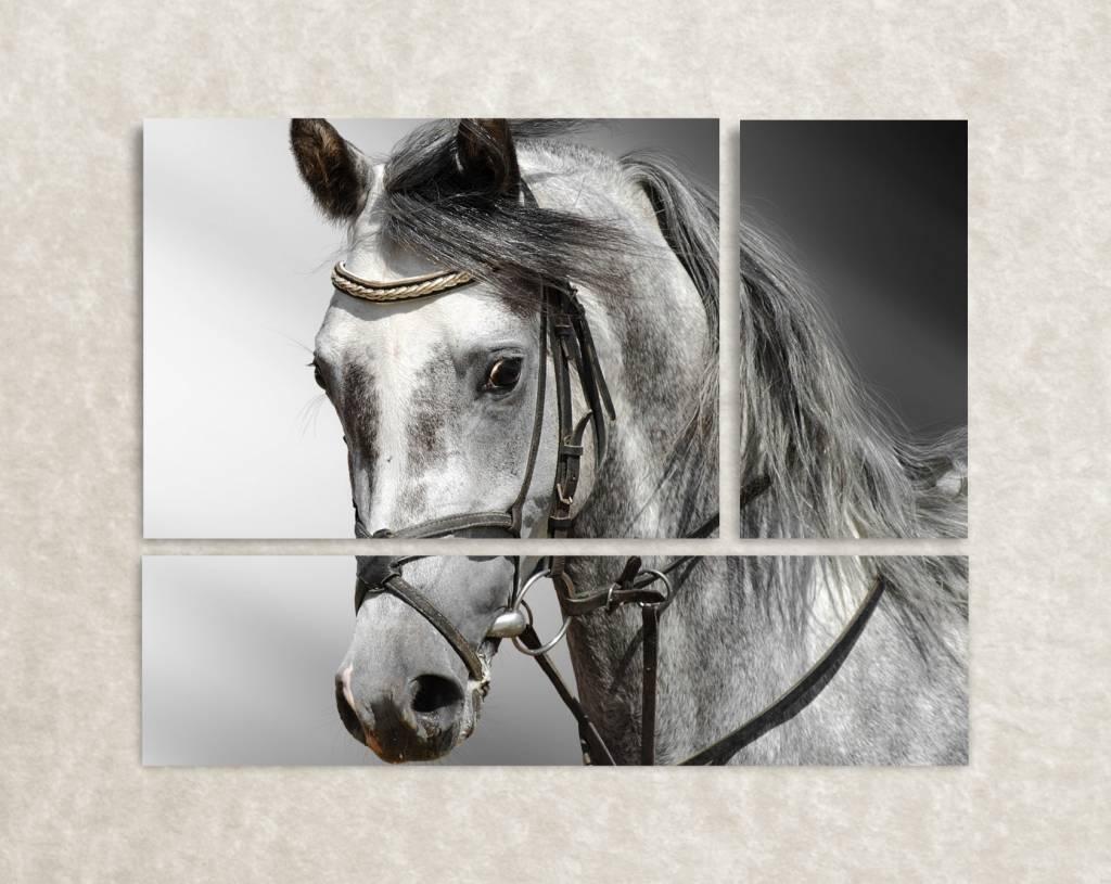 Canvas poster van paard