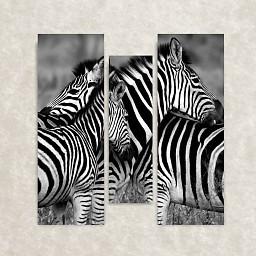 Canvas foto van Zebra