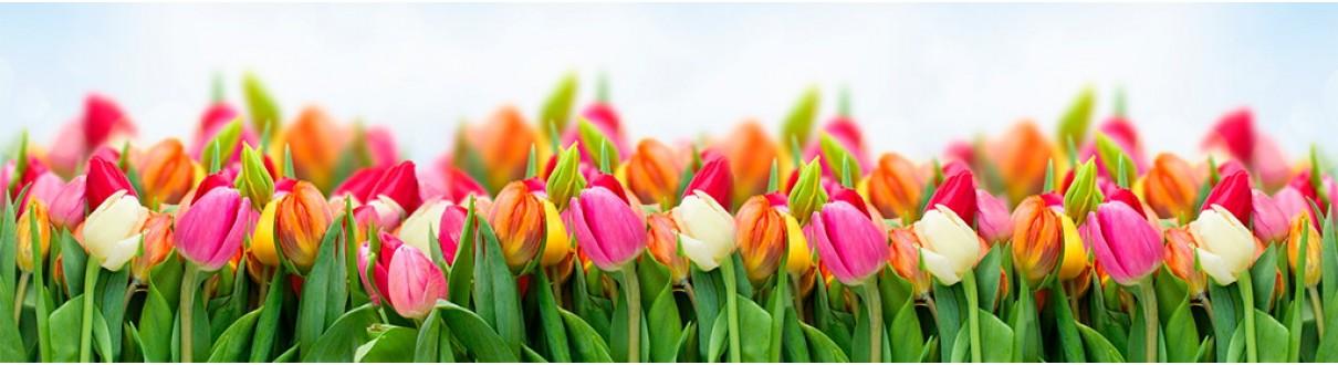 Met tulpen haal je de lente in huis - symbolisch cadeau