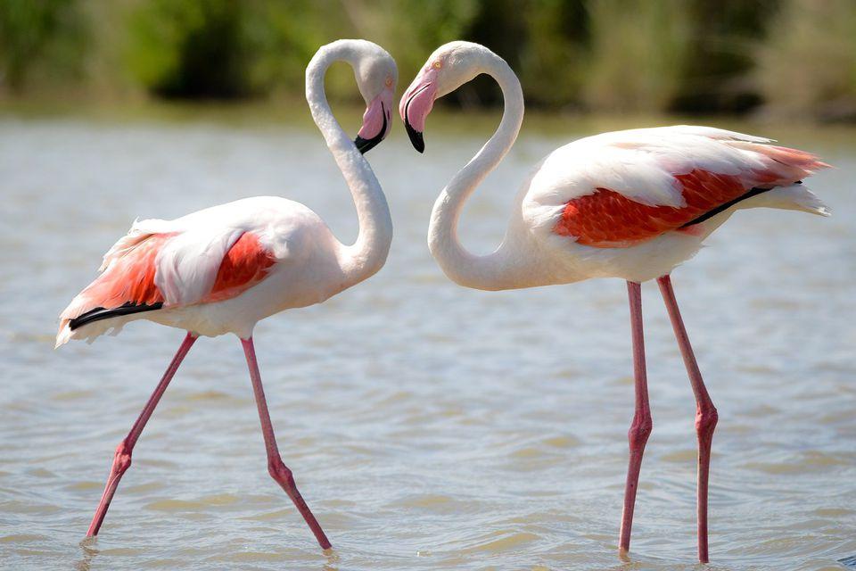 Trendy canvas posters voor kinderkamer - flamingo