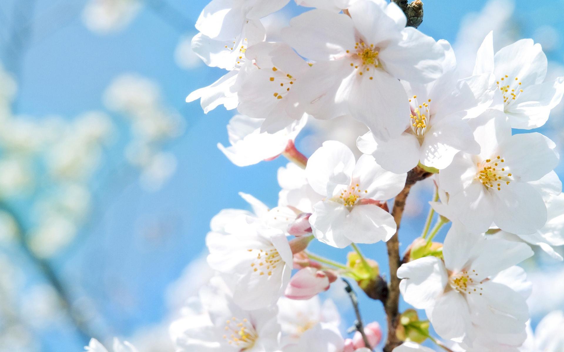 Muurdecoratie voorjaarssfeer - Lente