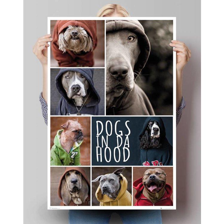 Honden Hoodies  - Poster 61 x 91.5 cm