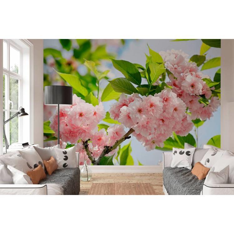 Bloesem Sakura - Fotobehang 366 x 254 cm