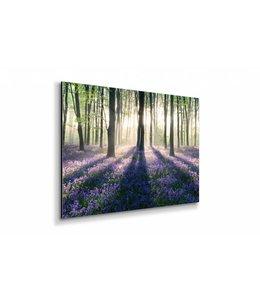 Schilderij Betoverend bos
