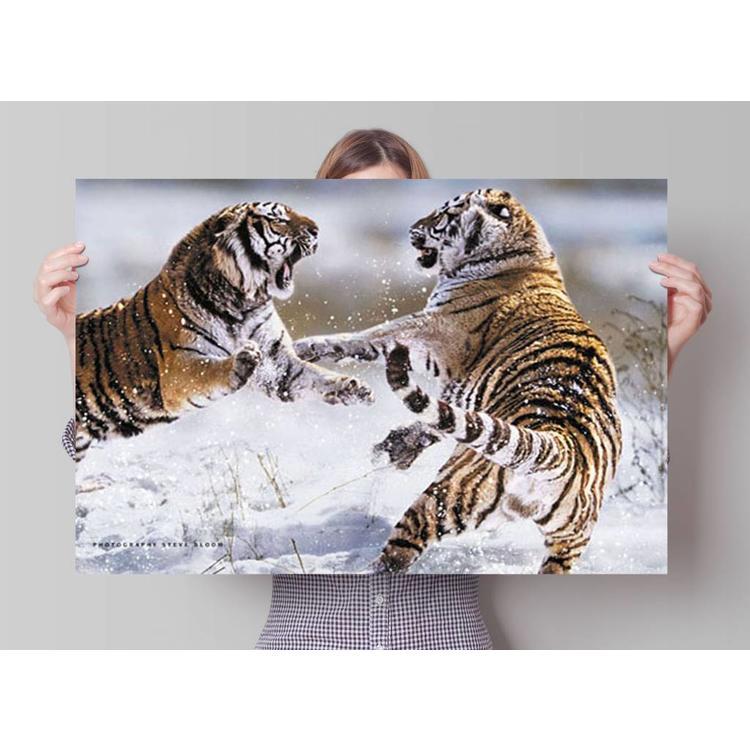 Siberische tijger  - Poster 91.5 x 61 cm