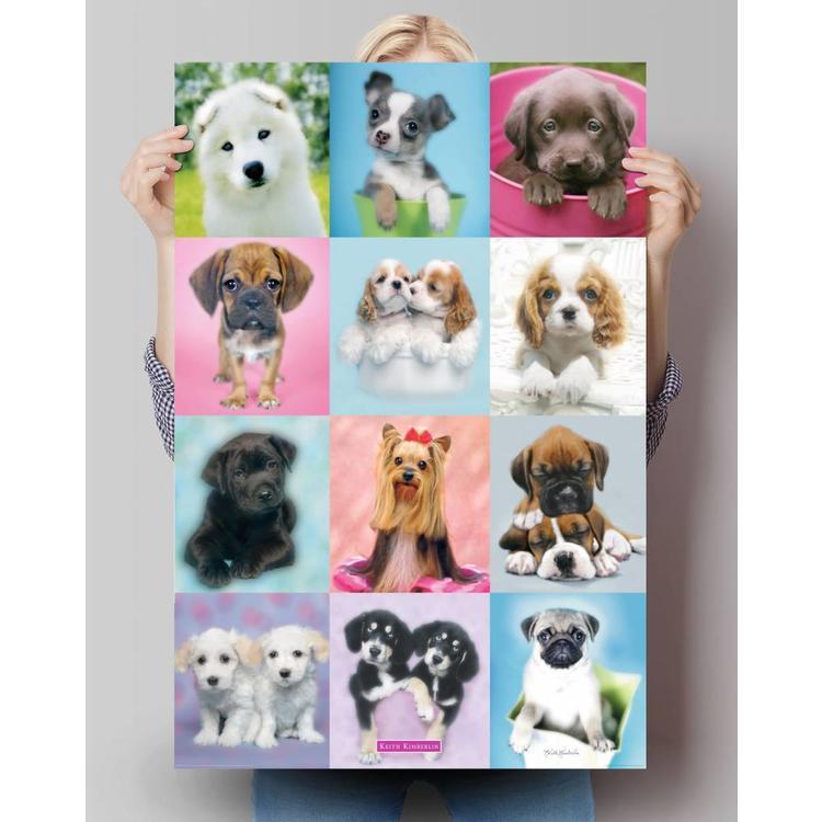 Keith Kimberlin honden in vierkant  - Poster 61 x 91.5 cm