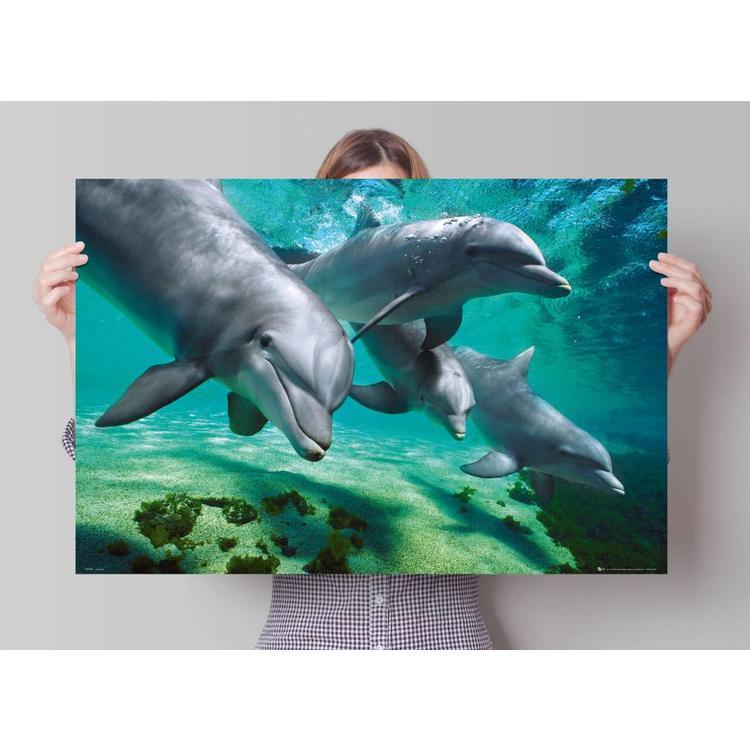 Dolfijnen onder water  - Poster 91.5 x 61 cm