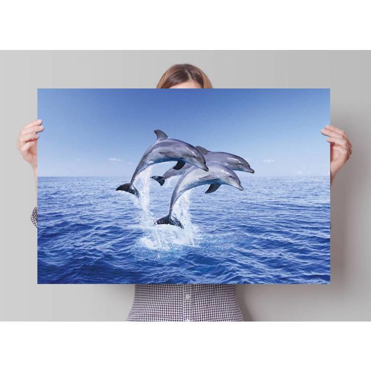 Dolfijnen trio  - Poster 91.5 x 61 cm