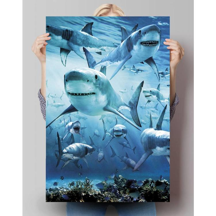Haai  - Poster 61 x 91.5 cm