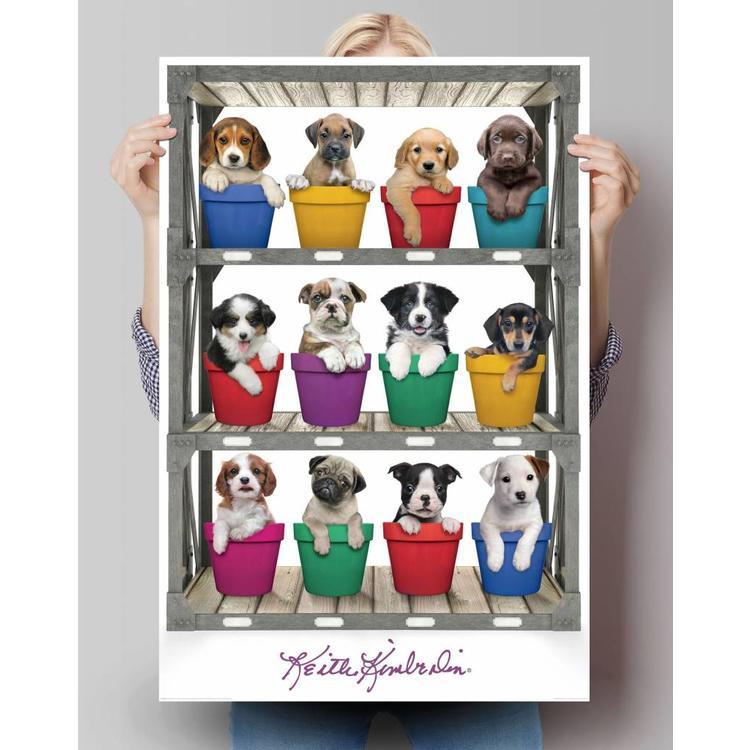 Keith Kimberlin pups voor de verkoop  - Poster 61 x 91.5 cm
