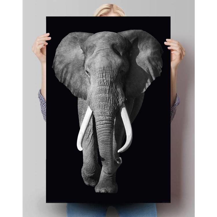 Olifant  - Poster 61 x 91.5 cm