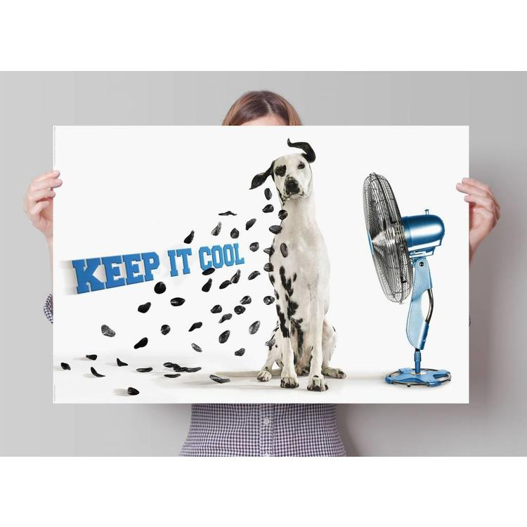Keep it Cool  - Poster 91.5 x 61 cm