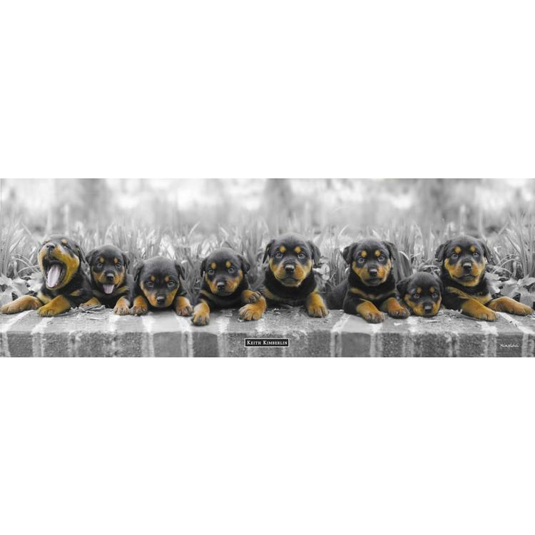 Puppies (Keith Kimberlin)  - Poster 158 x 53 cm
