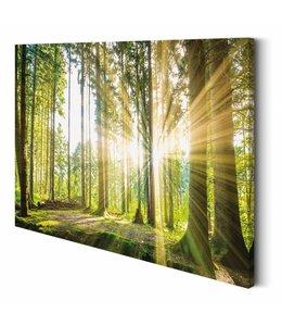 Schilderij Summer Forest