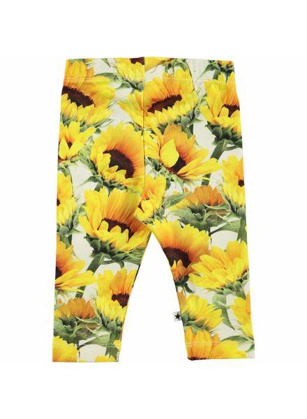 Molo Legging sunflowers field