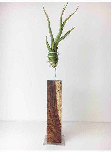Tillandsie auf Cocobolo Holz