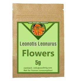 Leonotis Leonurus