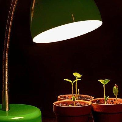 Pflanzenbeleuchtung