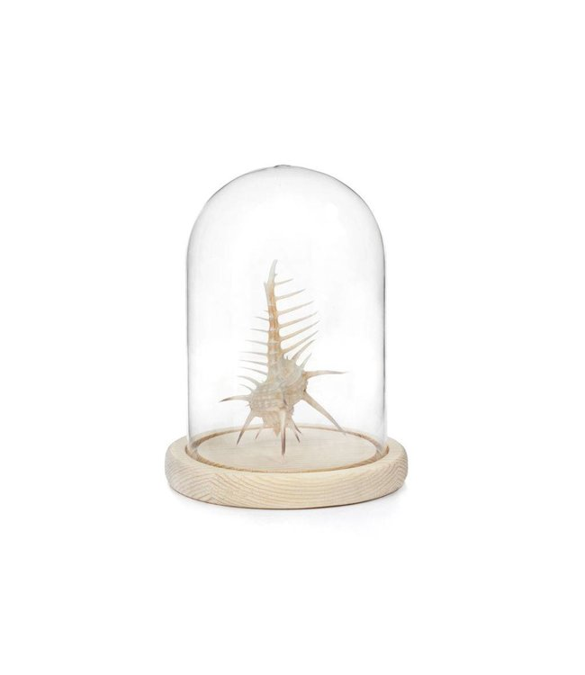 Kikkerland Glazen stolp L