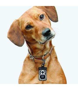 DOIY Roll dog