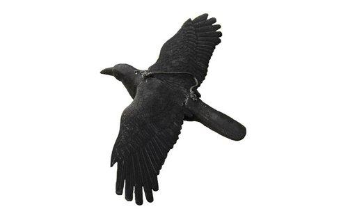 Lockvögel