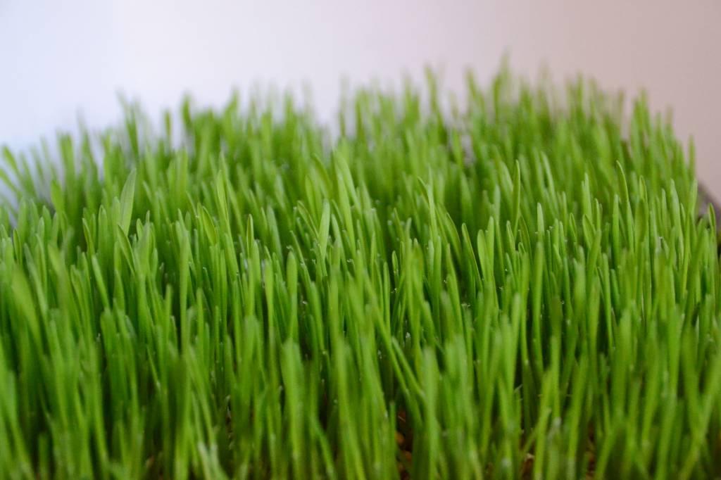 Lente: zelf kweken met korting & winactie!