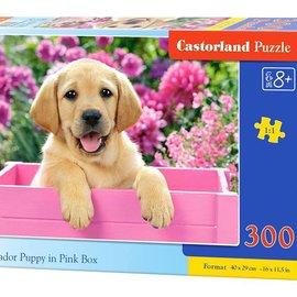 Castorland Castorland Labrador puppy in roze doos (300 stukjes)