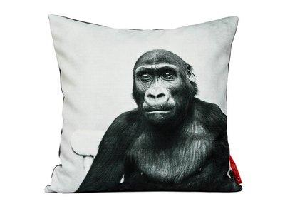 Gorilla, 1951