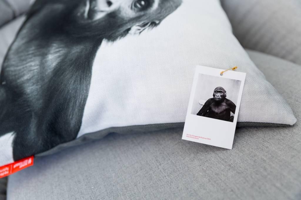 Gorilla, Diergaarde Blijdorp (1951)