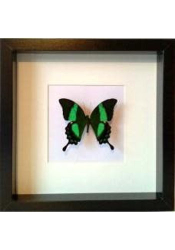 Vlinderwereld Butterfly Frame