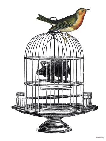 Frame 20x25cm Miracle bird