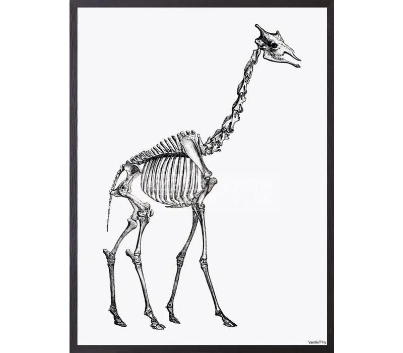 Frame 20x25cm Giraffe Skelleton