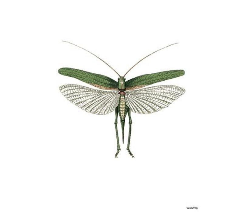 Frame 20x25cm Grasshopper