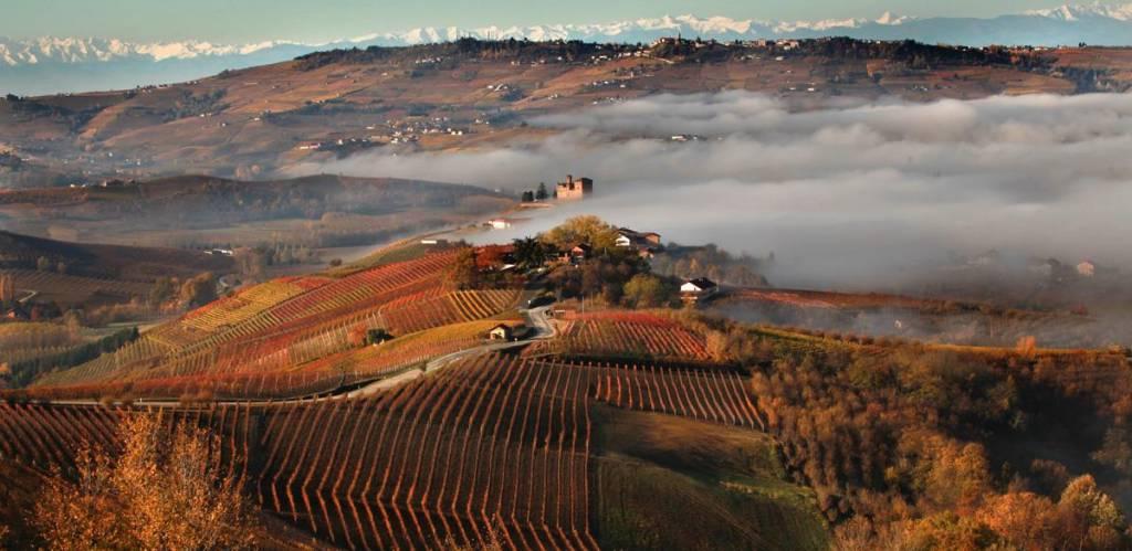 Terre del Barolo Langhe Nascetta DOC - 2016