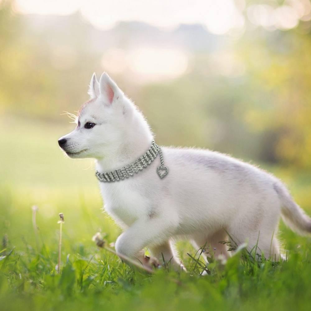 hondenhalsband van crystal met hart