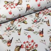 Softshell lightblue Birds
