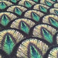 Stevige katoen Peacock