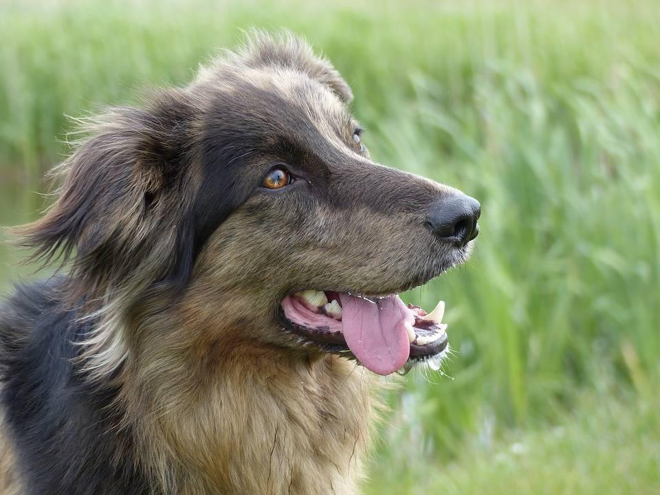 Hondenvoeding zonder granen en  geperst hondenvoer - Hondenbrokken online bestellen.