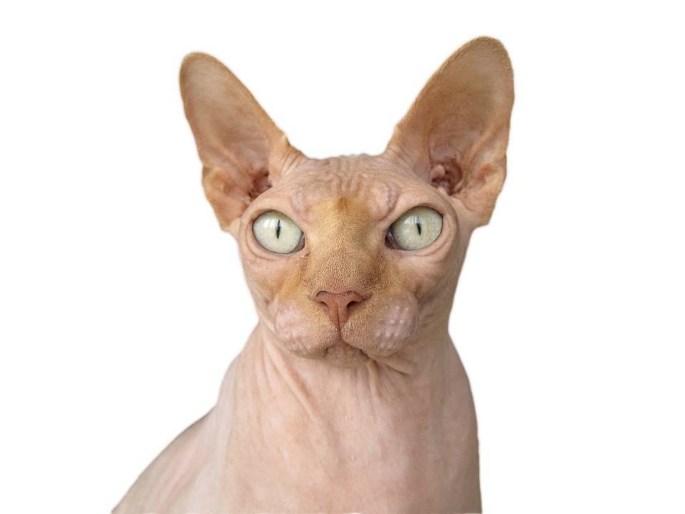 Kattenbrokken online bestellen