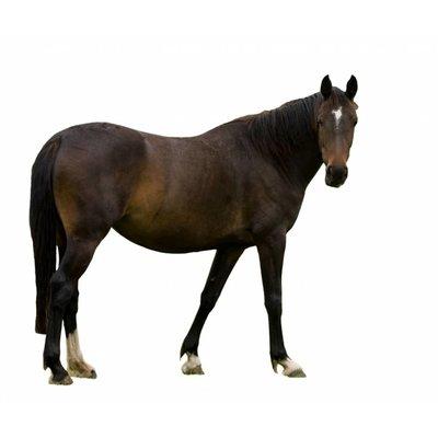 Enkelvoudige gemalen vers vlees voeding met paard.