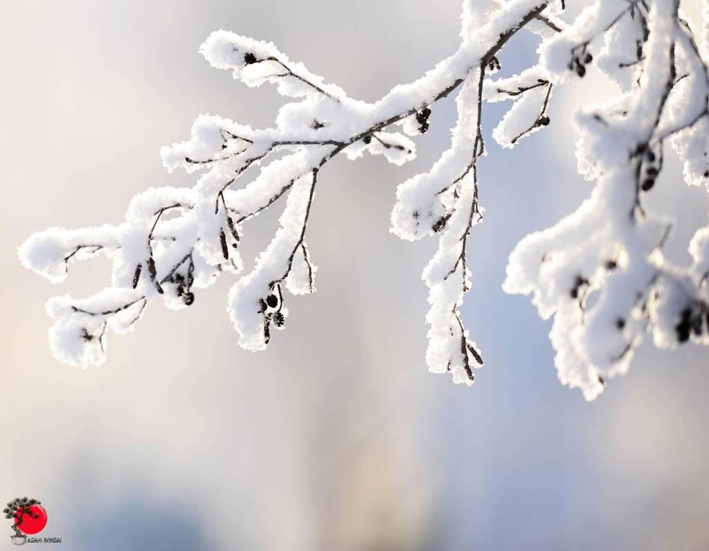 Der Winter...
