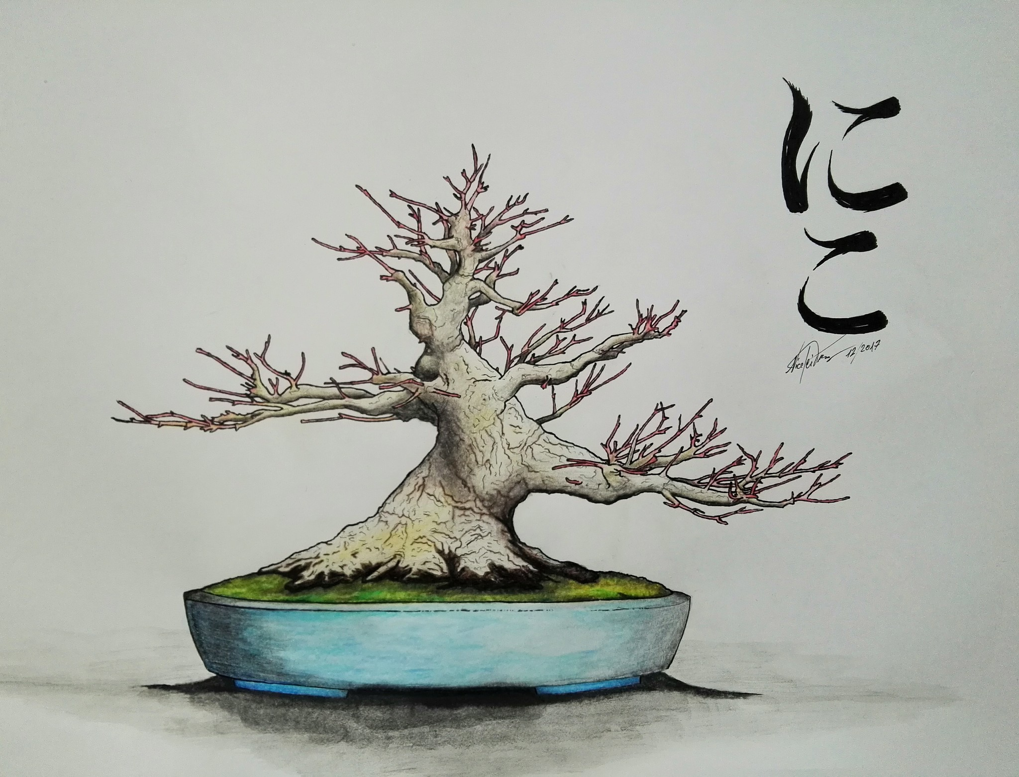 asahi bonsai zeichnen eines bonsai asahi bonsai. Black Bedroom Furniture Sets. Home Design Ideas