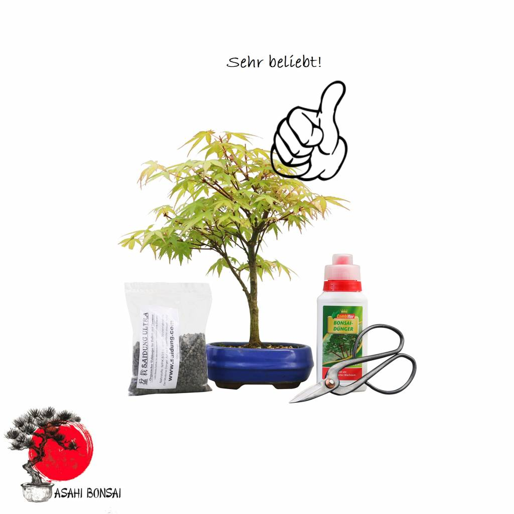 Bonsai Einsteiger-Set