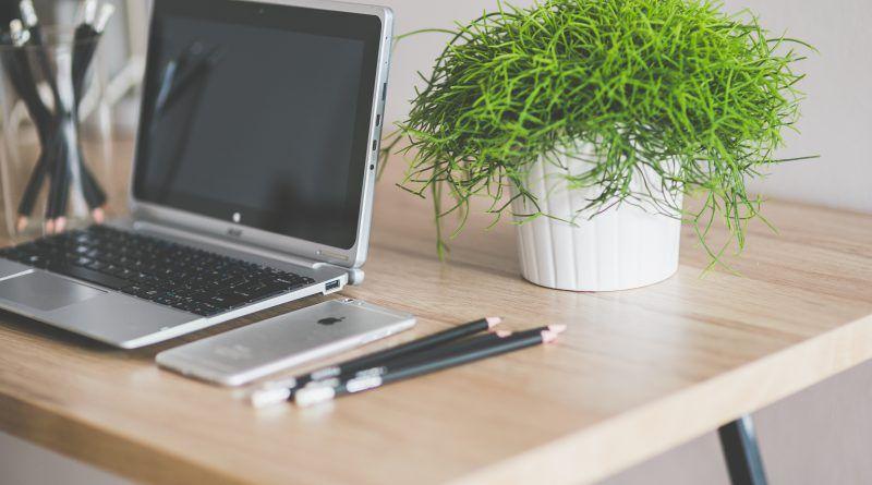 Welke planten kun je het beste plaatsen op kantoor?