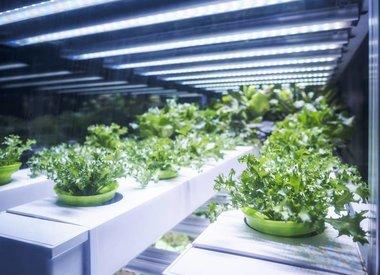 Grow Zelte Boxen