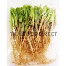 Fresh Import Coriander Root 100g