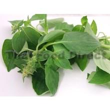 Fresh Import Hairy Basil ( Bai Mang Luk ) 100g