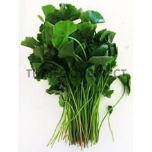 Fresh Import Fresh Bai Bua Bok (Pennywort Leaf) 100g