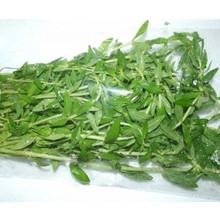 Fresh Import Pak Kayang (Finger Grass) 100g